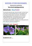 bluetenpflanzen_steckbrief