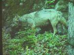wolf_2013_35