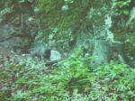 wolf_2013_36